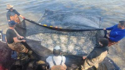 1 günde tam 15 ton! Balıkçıların yüzü güldü